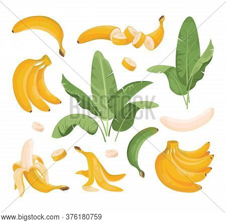 Exotic Bundle Of Banana Fruits: Bunches, Palm Tree Leaves. Tropical Fruits. Banana In A Peel, Sliced