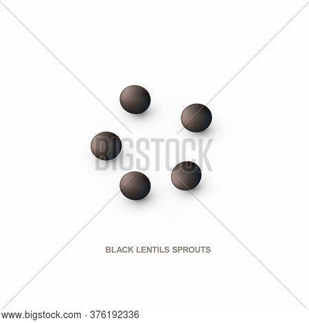 Realistic Black Lentils For Healthy Eating. Vector Illustration.