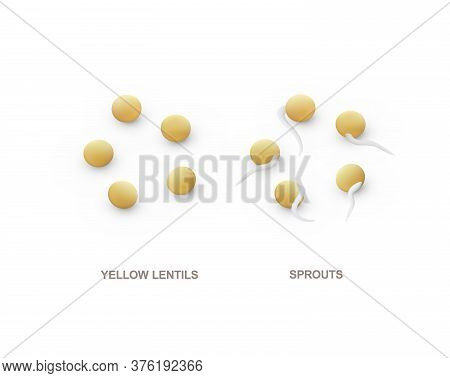 Set Of Realistic Yellow Lentils And Sprouts For Healthy Eating. Vector Illustration.