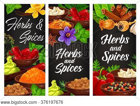 Herbs, Seasonings And Condiments Banners, Vector Food Cooking Flavorings. Farm Grown Garlic, Cinnamo