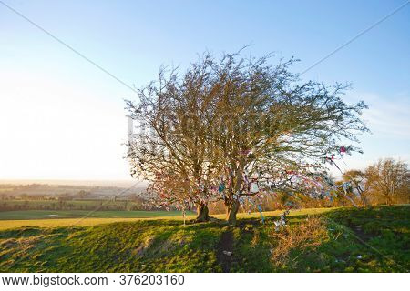 Fairy tree at Hill of Tara, Ireland