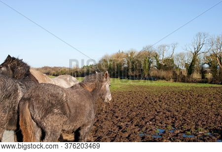 Photo of Horses in muddy field