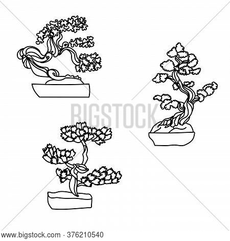 Set Of Outline Bonsai, Vector Hand Draw Illustration, Home Plant In Pot For Design And Creativity
