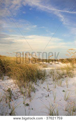 Pensacola Beach Dunes At Sunset