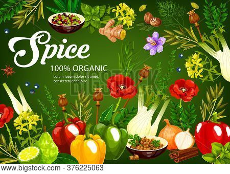 Herbs And , Seasonings Vegetables And Cooking Condiments, Vector Food Flavoring Ingredients. Farm Ga