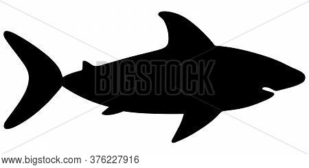 Shark. Large Predatory Sea Fish. Silhouette. Vector Stock Illustration. White Isolated Background. F