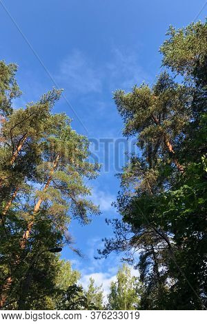 Vignette Of Green Tree Branches With Blue Sky, Vertical Photo