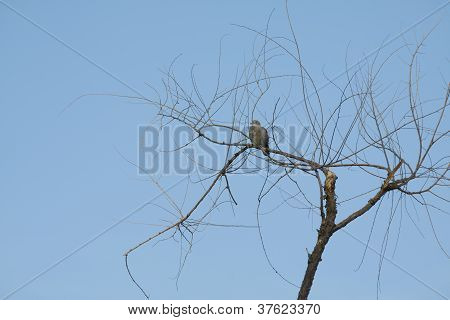 Branches Of Autumn Tree With Pidgeon
