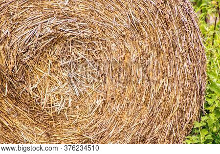 Large Agriculture Hay Bail