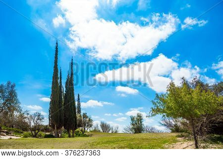 Scenic small desert park around the Ben Gurion Memorial. Cypress Alleys. Israel. Steep rock on a natural plateau