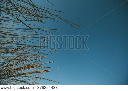 sea grass against the sky