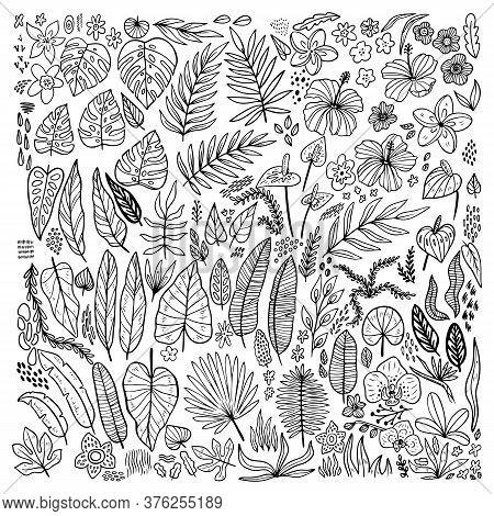 Tropical Plants Floral Doodle Set. Outline Collection Hawaiian Flower, Grass And Leaves. Hand Drawn