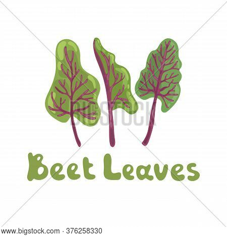 Beet Leaves. Beet Greens Cute Vector Stock Illustration. Fresh Swiss Chard Leaves Isolated On White.