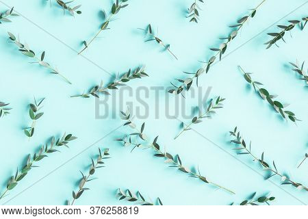 Eucalyptus Leaves On Blue Background. Pattern Made Of Eucalyptus Branches. Flat Lay, Top View