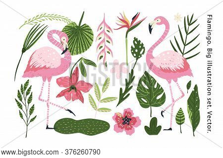 Flamingo Vector Cartoon Animal Set. Nature Flowers Leaves And Tropical Wildlife Bird Collection. Hol