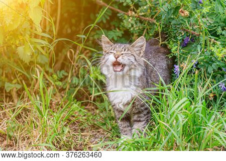 The Tabby Cat Is Lying In The Grass. House Cat On A Walk. Beautiful Cat For The Cover. The Range Of