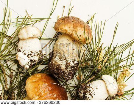 Fresh Cep Mushrooms