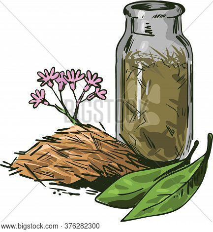 Cinchona Bark Vector Illustration. Blooming Flowers And Green Leaves, Bottle Withdry Herbs. Jesuits