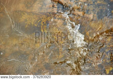 Brown Algae White Sea Fucus