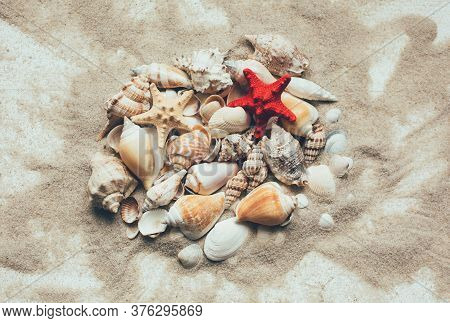 Seashells Summer Background. Lots Of Different Seashells Piled Together On A White Wooden Background