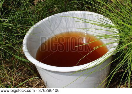 The Picture Shows Liquid Manure From Horsetail In A Horsetail Field