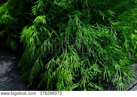 Fresh Green Dill Background. Fresh Green Dill Texture. Top View