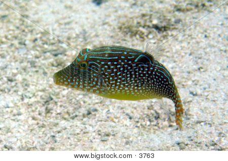 Tropical Fish 03