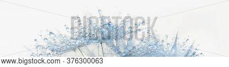 Beautiful Dew Drops On Dandelion Seed Macro. Beautiful Soft Light Background. Water Drops On Parachu