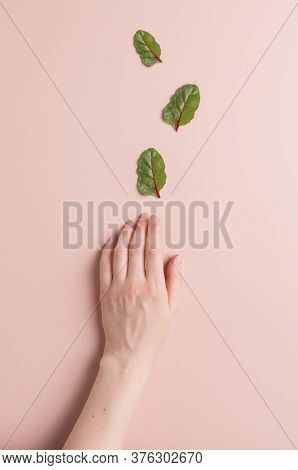 Woman Hand And Salad Leaves On Minimal Pink Background. A Woman\'s Hand Reaches For The Mangold Or S