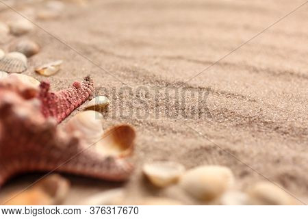 Various Seashells And Stones On The Sand