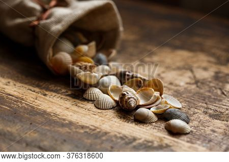 Sea Shells On Wooden Background. Close Up