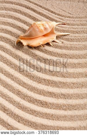 Seashells. Background With Free Place For Your Text.