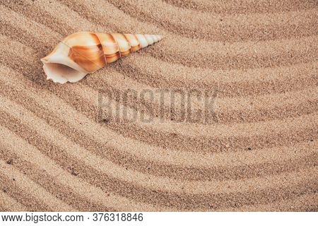 Long Seashell Lie On The Dunes. Top View.