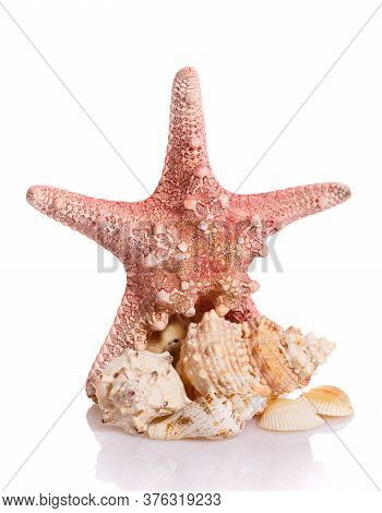 Starfish And Different Seashells On A White Background. Close Up.