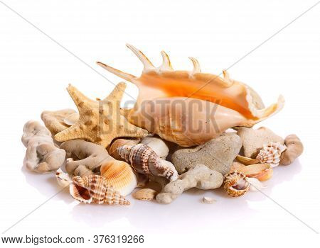 Marine Sea Shell In A Studio Setting Against A White Background.