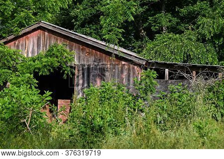 Weathered And Forgotten Barn Overgrown With Lush Green Foliage