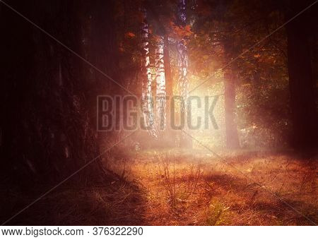 Mysterious Autumn Forest And Soft Golden Sunrays, Photomanipulation.