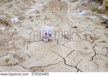 White Poppy Blooms In A Dried Field. Poppies In Cracked Arid Soil. Extreme Weather And Climate Chang