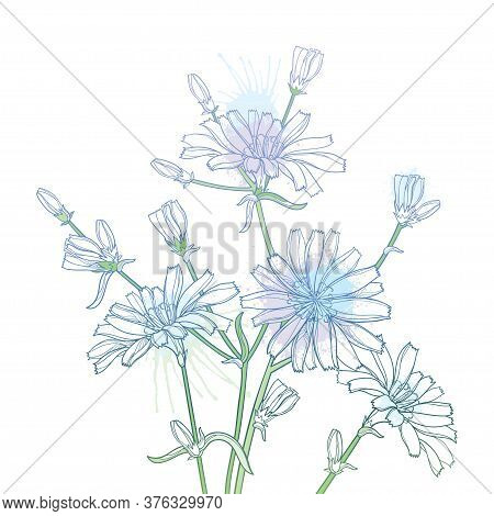 Vector Bouquet Of Outline Chicory Or Cichorium Flower, Bud And Ornate Leaves In Pastel Blue Isolated