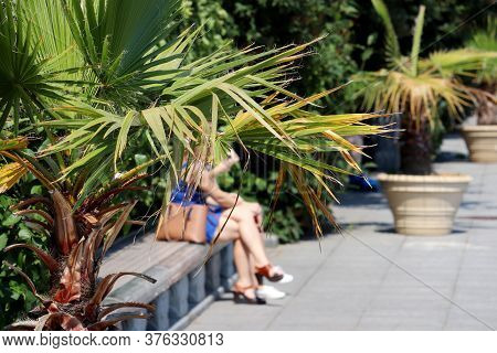 Tropical Garden, View Through Palm Leaves To Girls Sitting On A Bench. Palm Trees In Tubs In A Summe
