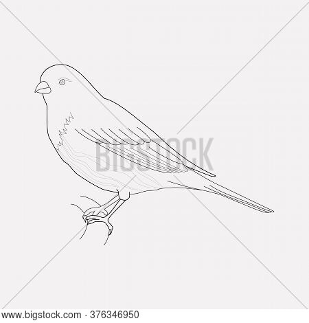 Finch Icon Line Element. Vector Illustration Of Finch Icon Line Isolated On Clean Background For You