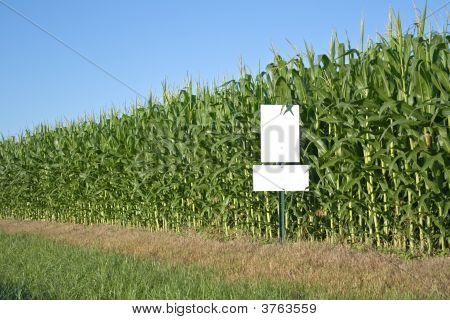 Cornfield With Blue Sky And White Sign
