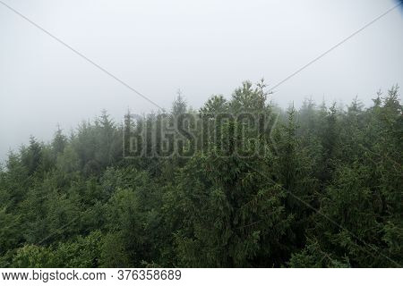 Wild Green Forest In Morning