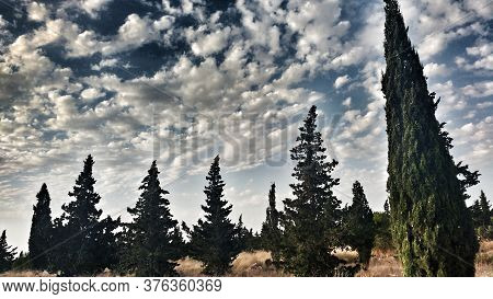 Countryside Landscape With Native Bushes And Conifers In Alicante, Spain