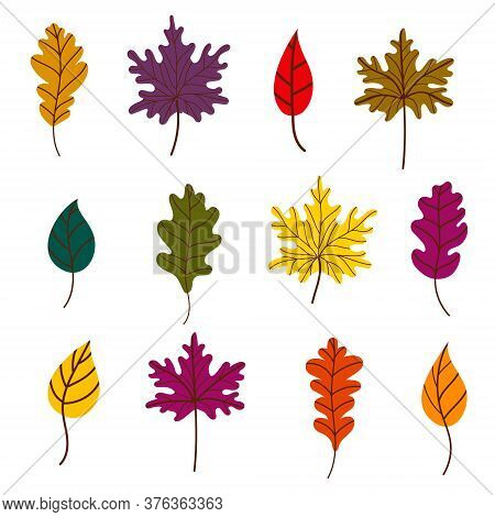 A Set Of Bright Autumn Leaves. Leaf Litter. Maple, Oak, And Birch Leaves Isolated On A White Backgro