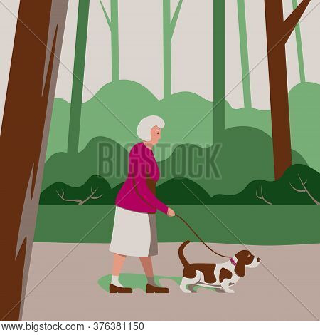 Elderly Old Woman Pensioner Walks A Dog In Forest Park, Care For Pet, Outside Activity Of Senior, Wa