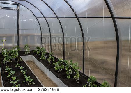 Greenhouse Vegetables, Horticulture, Crop Year  Photo A