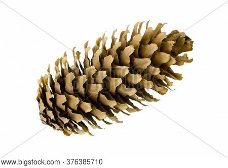 Pine Cone Isolated On A White Background Without A Shadow.