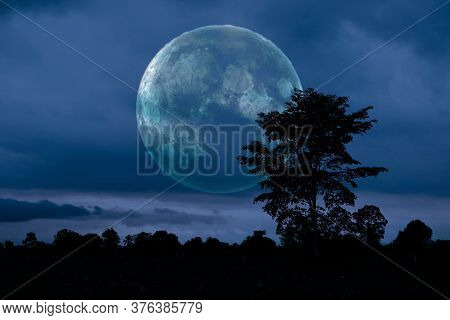 Full Crust Dark Moon And Silhouette Tree In The Field And Night Sky