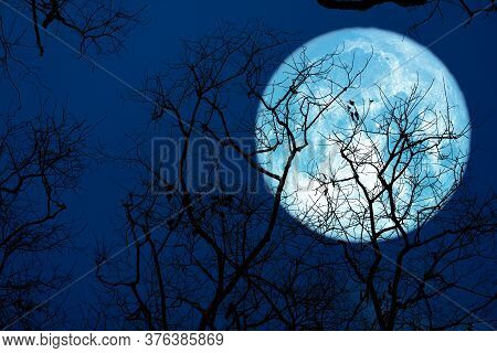 Sturgeon Blue Moon And Silhouette Tree In The Night Sky